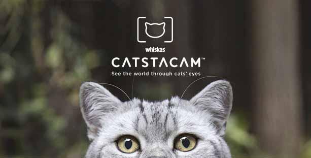 CATSTACAM