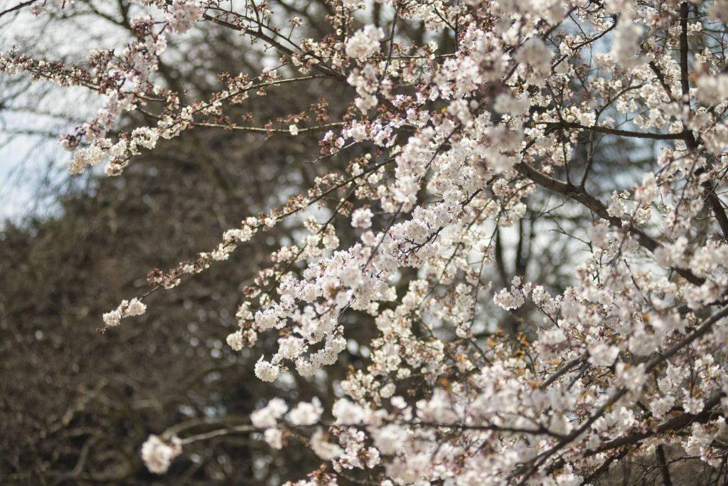 VIAGGIO_GIAPPONE_TOKYO_SHINJUKU_GYOEN_03